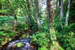 Salgadelos rill and forest in the province of Lugo in Spain. Little runlet in a quiet corner in the village of Sargadelos in the north of Galicia in Spain Royalty Free Stock Image