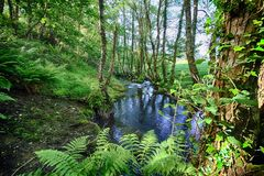 Salgadelos rill and forest in the province of Lugo in Spain. Little runlet in a quiet corner in the village of Sargadelos in the north of Galicia in Spain Stock Photos