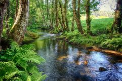Salgadelos rill and forest in the province of Lugo in Spain. Little runlet in a quiet corner in the village of Sargadelos in the north of Galicia in Spain Royalty Free Stock Photography