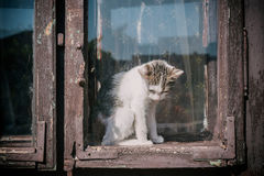 Little sad cat. Sitting in the window,selective focus Royalty Free Stock Images