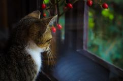 Little sad cat. Waiting behind window stock images