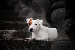 Little sad dog is lying on the stairs in the park royalty free stock image