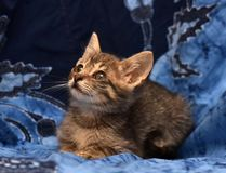 Little sad gray striped kitten Royalty Free Stock Images