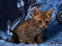 Little sad gray striped kitten Stock Photo