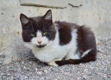 Little sad kitten. Little kitten with sad eyes Royalty Free Stock Images