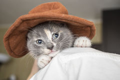Little a sad kitten with hat sits on the shoulder the owner Royalty Free Stock Photo
