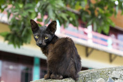 Little Sad Kitten. Stock Images