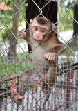 A little sad monkey Stock Photography