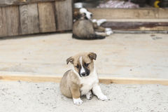 Little sad puppy waiting family Royalty Free Stock Images