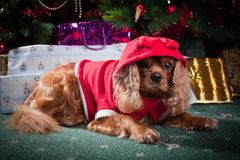 Little Santa Helper Royalty Free Stock Photos