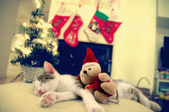Little Santa kitten Christmas with tree and Christmas Toy Royalty Free Stock Photos