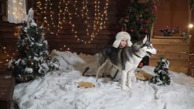 Little scared girl with a big husky dog in the snow next to Christmas trees. Little scared girl with a big husky dog in the snow near the Christmas trees on the stock video