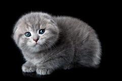 Little scared kitten Stock Images