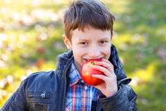 Little schoolboy bite apple Royalty Free Stock Image