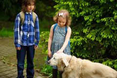 Little schoolchildren met on the way to school a large dog. The good-natured retriever drew the children`s attention. The girl fearlessly strokes the big dog stock photo