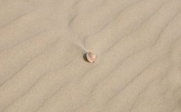 Little sea shell on light sand background Royalty Free Stock Image