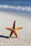 Little sea star Stock Photo
