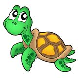 Little sea turtle. Color illustration Stock Photo