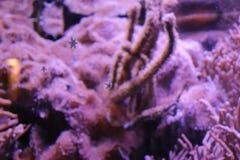 Little seastar in Focus in zoo in germany in nuremberg royalty free stock photo