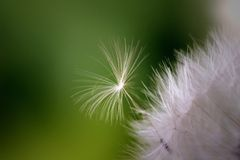 Little seed trying to break free. Royalty Free Stock Images