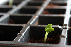 Little seedling plant Royalty Free Stock Photography