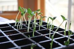 Little seedling plant Stock Photography