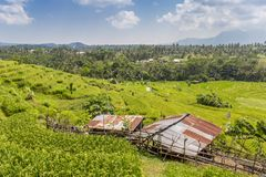Little shed in a rice field on Bali. Indonesia stock photos