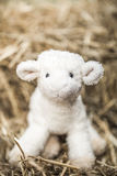 Little sheep toy stock photography