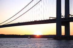 The little sheep under The Verrazano-Narrows Bridg. The little sheep under Verrazano-Narrows Bridge , The largest and longest bridge in New York City on the royalty free stock images