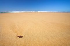 Little shell on a flat beach with Blue Sky Royalty Free Stock Image