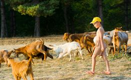 Little shepherd. With yellow cap and his herd of goats Royalty Free Stock Photo