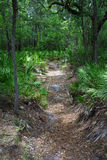 Little Shoals Hiking. A backcountry trail takes hikers to Little Shoals on the Suwannee River, Florida Stock Photography