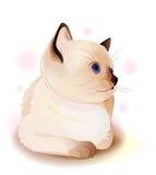 Little Siamese  kitten. Stock Photo