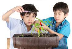 Little sibbling boy working with gardening Royalty Free Stock Images
