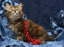 Little Siberian kitten Stock Images