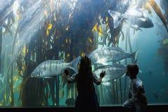 Little siblings looking at fish tank Royalty Free Stock Photos