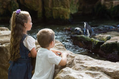 Little siblings looking at penguins Stock Images