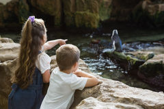 Little siblings looking at penguins Stock Photo