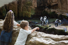 Little siblings looking at penguins Stock Photos