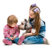 Little sisters with the dog Yorkshire Terrier Stock Image