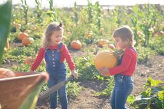 Happy girls with wheelbarrow at field pumpkin patch Royalty Free Stock Photos