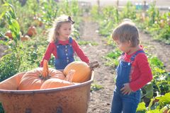 Happy girls with wheelbarrow at field pumpkin patch Royalty Free Stock Image