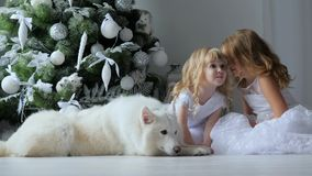 Little sisters tell secrets in christmas eve sitting in white dresses next to dog on background of new year tree. Little sisters tell secrets in christmas eve stock footage