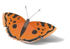 Little Sitting Butterfly Royalty Free Stock Photography