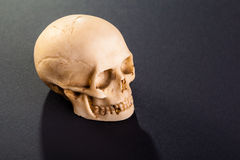 Little skull Stock Photography