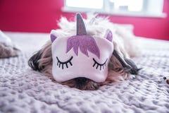Little sleeping unicorn royalty free stock photography