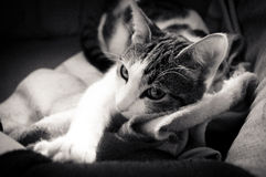 Little sleppy cat Stock Photo
