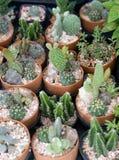 Little small cactus garden Stock Photo