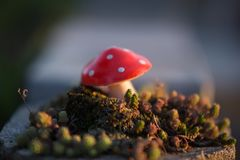 Little red mushroom closeup macro royalty free stock images