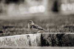 Little smart  bird in iran stock image